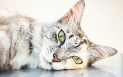 De beste kattenbrokjes Almo Nature en Purizon