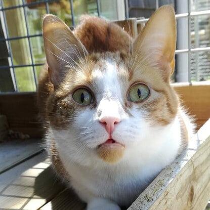 Speels en nieuwsgierig naar alles in het kattenhotel