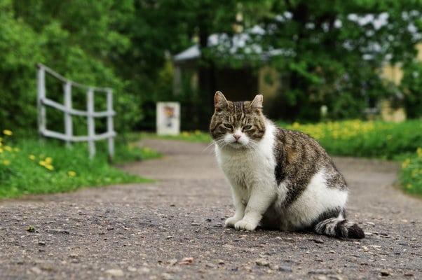 Kattenpension Drenthe route vanuit Emmen, Hoogeveen