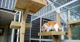Klimpalen en ligplekken in het kattenhotel