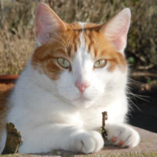 Panter is de zoon van poes Shakira waarnaar het kattenpension is vernoemd