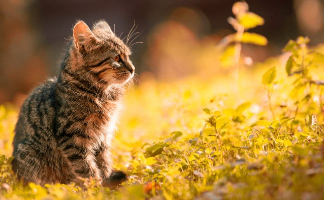 Dierenasiels en kattenopvang