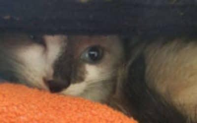 Kitten gevonden, zwemmend in het kanaal bij Dieverbrug